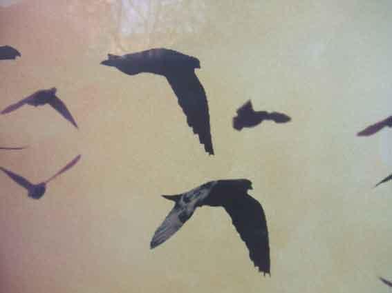 cien volando